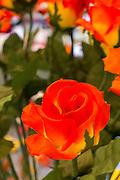 Sebnitzer Kunstblume, Sebnitz, Sächsische Schweiz, Elbsandsteingebirge, Sachsen, Deutschland | artificial flower, Sebnitz, Saechsische Schweiz, Saxon Switzerland, Saxony, Germany