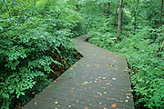 Boardwalk trail through woods, Hemlock Bluffs Nature Preserve, North Carolina