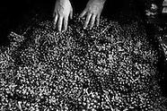 Jacquet wine tradition --- A tradição do vinho Jacquet 2012