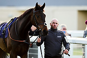 "Kings Inn ridden by Megan Nicholls and trained by Paul Nicholls in the Read ""Group 1 Griff"" At Valuerater.Co.Uk Handicap race.  - Mandatory by-line: Ryan Hiscott/JMP - 01/05/2019 - HORSE RACING - Bath Racecourse - Bath, England - Wednesday 1 May 2019 Race Meeting"