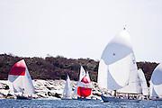 Dorade and Robin racing in the Sail For Pride regatta.