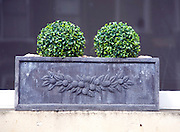 Attractive window box plants, Bath
