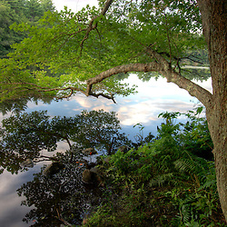 A maple tree leans over the Indian Head River at the Tucker Preserve in Pembroke, Massachusetts.