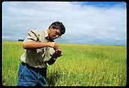 Foreman Rubimar dos Santos Leitzke inspects rice grains in ripe field; Granja Bretanhas farm, RS Brazil