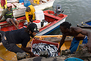 Fishermen bringing in their catch from a small boat in Castries, St Lucia, The Windward Islands, The Caribbean