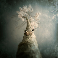 A small butterfly sitting on a tree with overlaid textures