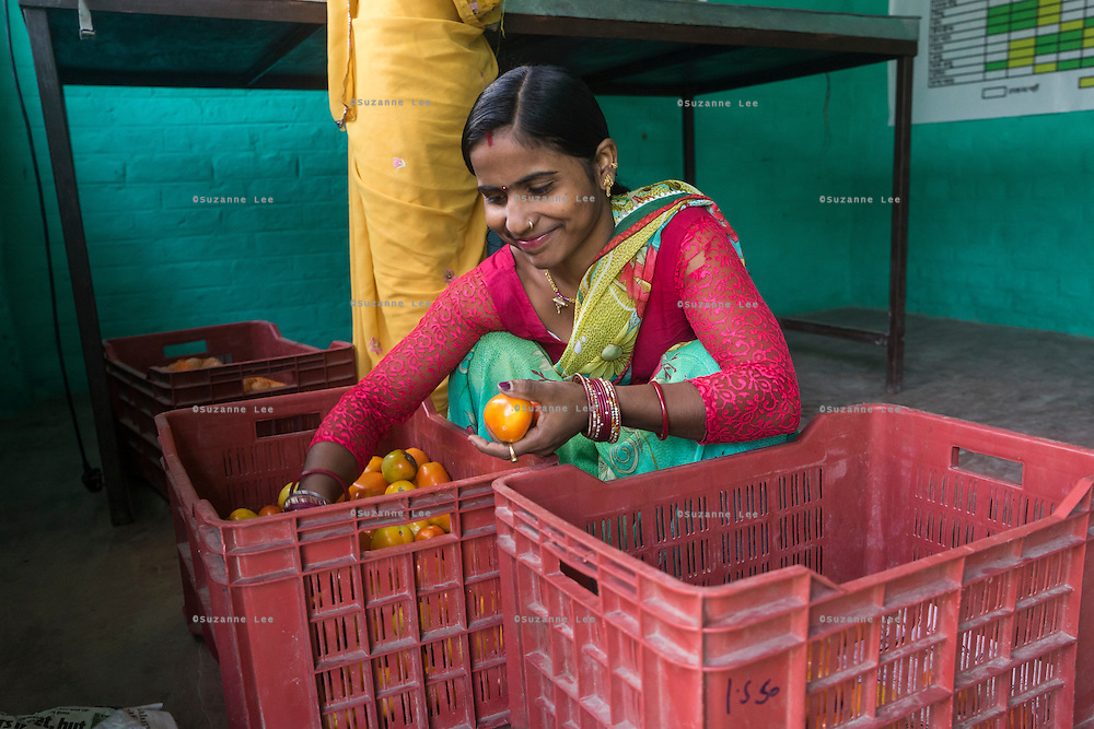 Collection centre owner and farmer Asha Devi (in red blouse), 23, sorts through vegetables brought in by other producer group farmers to be sold to the collection centre in Machahi village, Muzaffarpur, Bihar, India on October 27th, 2016. Asha Devi and her husband Ganesh Kumar Singh, 30, rent out a part of their house to be used as a collection centre for Producer Group farmers. Non-profit organisation Technoserve works with women vegetable farmers in Muzaffarpur, providing technical support in forward linkage, streamlining their business models and linking them directly to an international market through Electronic Trading Platforms. Photograph by Suzanne Lee for Technoserve