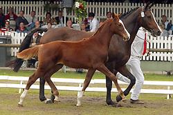 016-Abbas<br /> KWPN Paardendagen 2005<br /> Photo © Hippo Foto