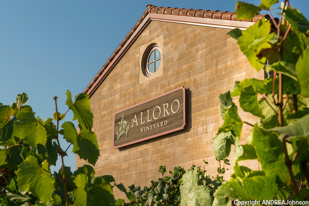 Alloro pinot noir harvest 2012, Willamette Valley, Oregon