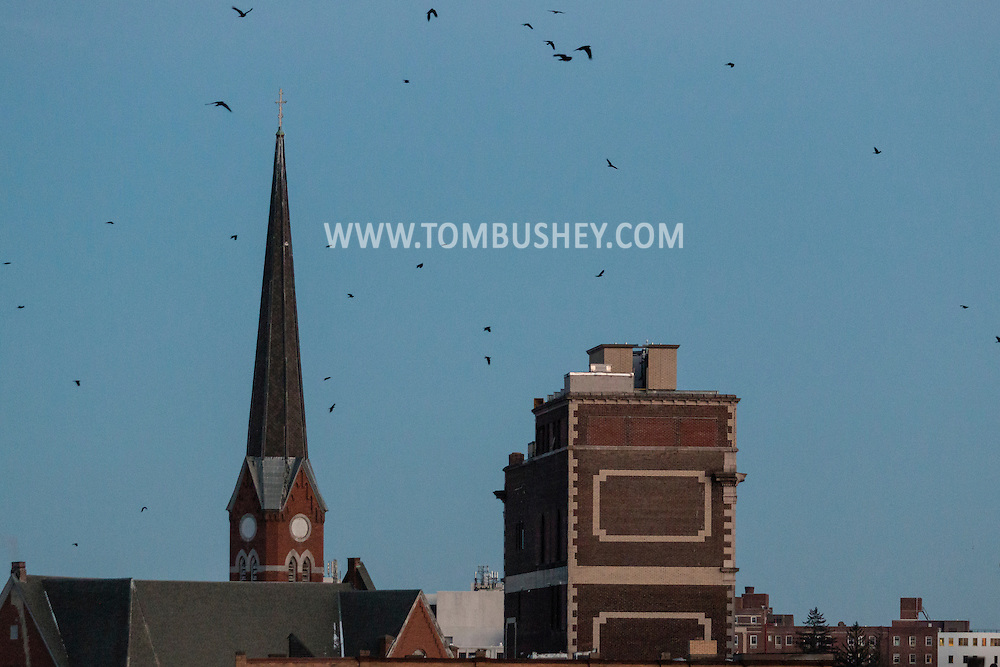 Middletown, New York - Crows fly toward their roosting site in downtown Middletown at twilight on Jan.13, 2016.