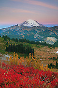 Mount Rainier rises above hillsides ablaze in fall color in this view from the Chinook Pass Scenic Byway, Washington.