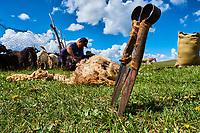 Kirghizistan, province de Naryn, le lac de Song Kol, campements de yourte des nomades Kirghiz, tonte de la laine // Kyrgyzstan, Naryn province, Song Kol lake, Kirghiz nomad's yurt camp, wool cuting