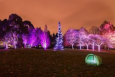 NOV 24 2013 Enchanted Woodland