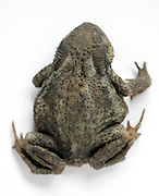 overhead view of a frog