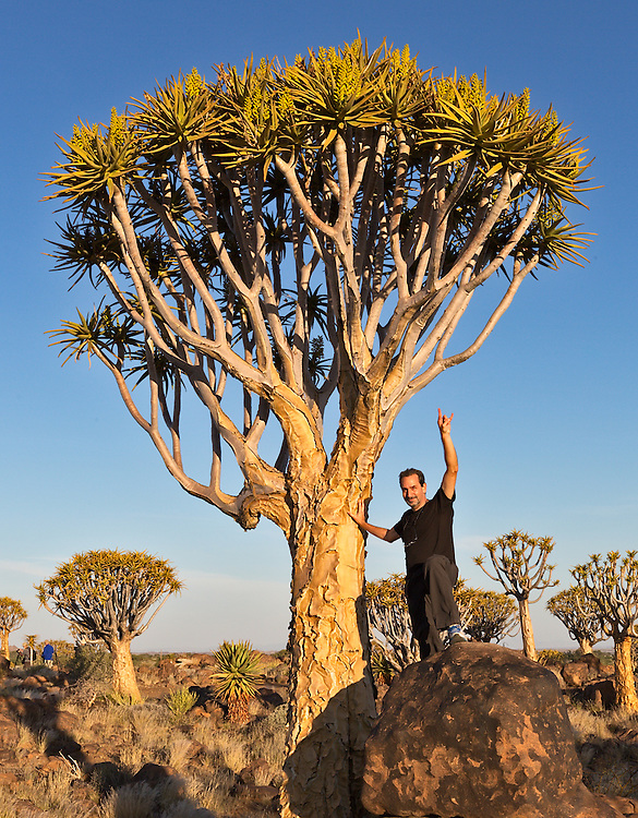 Quiver trees are large, succulent aloe plants.
