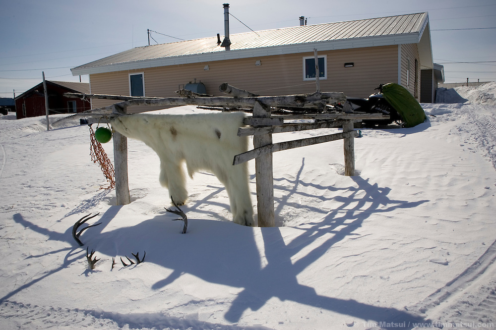 May 1, 2008 -- Kivalina, AK, U.S.A..A polar bear skin outside a home in the native village of Kivalina, Alaska. The native Inupiat do not hunt polar bear, but if confronted by one they will kill and use it just as they would any other animal in their traditional subsistence lifestyle. (Photo by Tim Matsui)