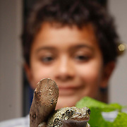 07/09/2015,MA: George Iker Richardson, 6, proudly watch a Grey Treefrong at his home in Bradford-Haverhill <br />