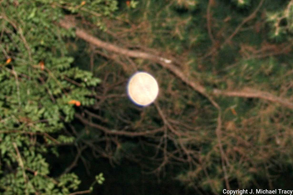 A bright peach colored orb floating near the trumpet vines in the back yard of our house.
