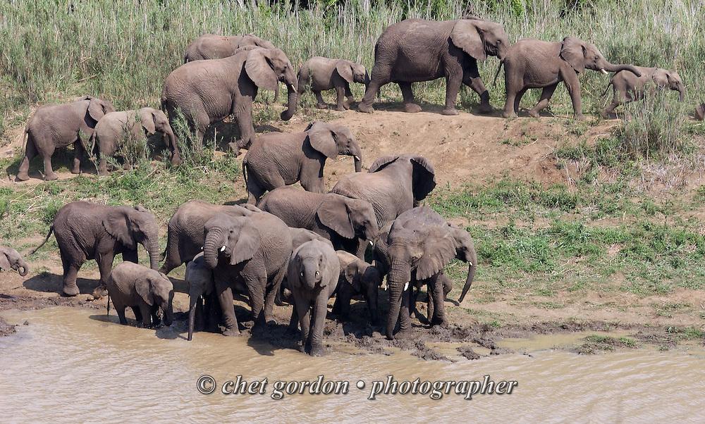 KWAZULU NATAL, SOUTH AFRICA.  African elephants at the Hluhluwe Umfolozi Game Reserve in KwaZulu Natal, South Africa on Friday, September 15, 2006. Established in 1895, Hluhluwe Umfolozi is South Africa's oldest game park.    © www.chetgordon.com