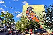Nederland, the netherlands, nijmegen, 6-9-2018Muurschildering in het centrum van de stad . Een kleurrijke vogel tegen een gele achtergrond.Foto: Flip Franssen