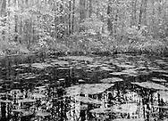Pond, Frost Farm, Fall, 1989