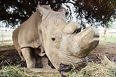 Sudan the last male Northern Rhino has died - 20 March 2018