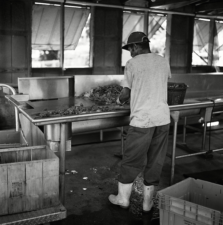 A worker at the Wando Seafood Company heads, shells and deveins shrimp, preparing it to sell to customers.