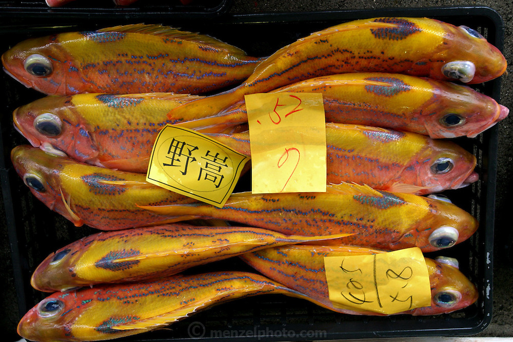 Snapper, Ginowan City, Okinawa. (From a photographic gallery of fish images, in Hungry Planet: What the World Eats, p. 204).