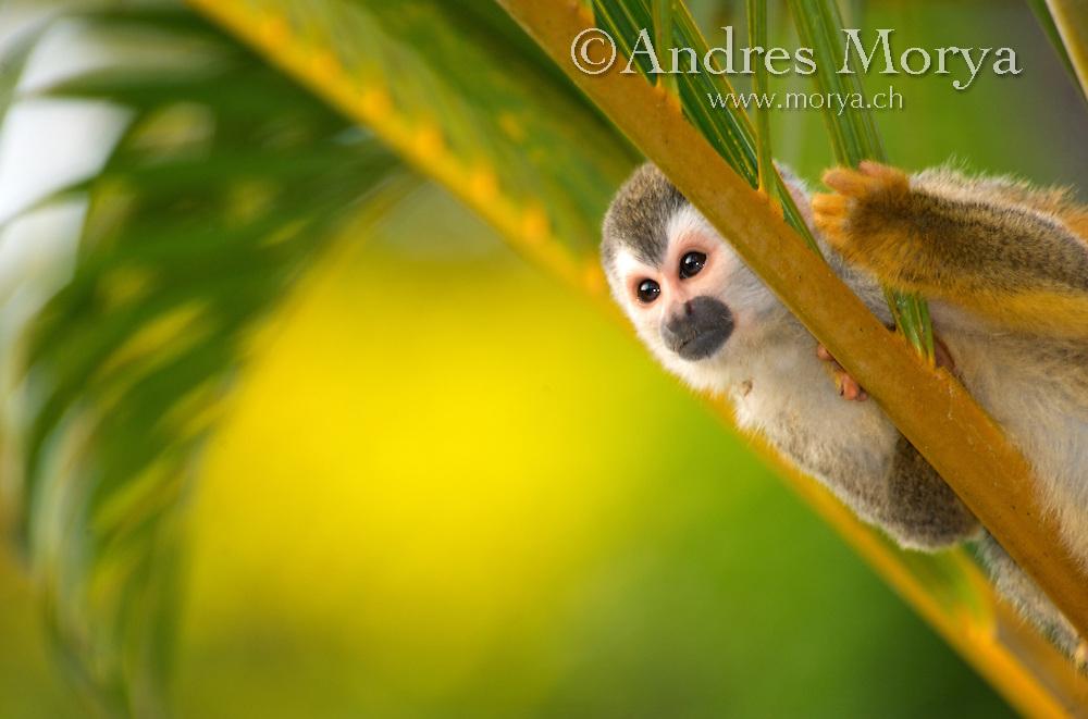 Image by Andres Morya