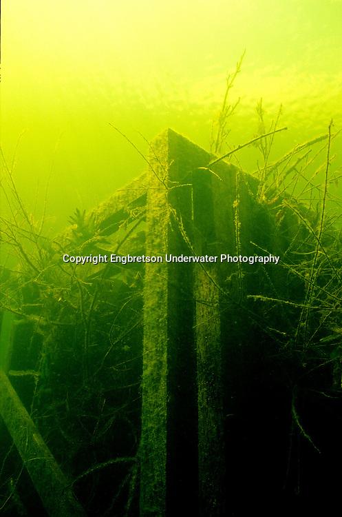Fish Crib<br /> <br /> ENGBRETSON UNDERWATER PHOTO