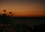 Orange tropical tree flowers and ship at sunrise, sunset with cruise ship on the horizon.