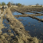 Canadian soldiers from the Van Doos B Company walk on a narrow path past irrigated agricultural land in the Sangasar region during the Canadian lead Operation Tashwish Mekawah in a joint operation with Afghan National Army (ANA) soldiers in the Sangasar and Howz-E-Madad area in the volatile Zhari District in Afghanistan.