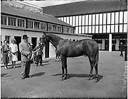 "02/08/1960<br /> 08/02/1960<br /> 02 August 1960<br /> R.D.S Horse Show Dublin (Tuesday). Mr Tommy McVeigh, Lakeview House, Carrickmannon, Co. Down with ""Carrickmannon"" winner of the cup and 1st prize winner in the Thoroughbred Yearling Class at the Dublin Horse Show."