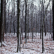 A dusting of snow covers a small woodland of trees and the leaf-strewn ground below them in rural Loudoun County, Virginia.