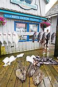 Fiske i Homer, Alaska, USA