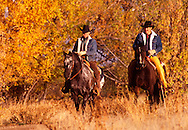 cowboys riding in fall colors Heber City UT
