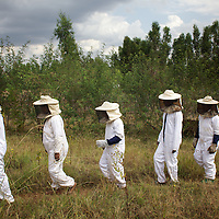 Women from the village of Mecha, dressed in protective clothing, during a workshop at the Ambrosia beekeeping demonstration and training centre in Mecha.<br /> <br /> Harvesting honey supplements the income of small farmers in the Ethiopian region of Amhara where there is a long tradition of honey production. However, without the resources to properly invest in production and the continued use of of traditional, low-yielding hives, farmers have not been able to reap proper reward for their labour. <br /> <br /> The formation of the Zembaba Bee Products Development and Marketing Cooperative Union is an attempt to realize the potential of honey production in Amhara and ensure that the benefits reach small producers. <br /> <br /> By providing modern, high-yield hives, protective equipment and training to beekeepers, the Cooperative Union helps increase production and secure a steady supply of honey for which there is growing demand both in and beyond Ethiopia. The collective processing, marketing and distribution of Zembaba's &quot;Amar&quot; honey means that profits stay within the cooperative network of 3,500 beekeepers rather than being passed onto brokers and agents. The Union has signed an agreement with the multinational Ambrosia group to supply honey to the export market. <br /> <br /> Zembaba Bee Products Development and Marketing Cooperative Union also provides credit to individual members and trains carpenters in the production of modern hives. <br /> <br /> Photo: Tom Pietrasik<br /> Mecha, Amhara. Ethiopia<br /> November 17th 2010