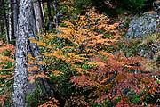 "Fall foliage colors in Yokoo Valley, Hida Mountains, Chubu-Sangaku National Park, in the ""Northern Alps"" of the Japanese Alps, near Kamikochi, Nagano Prefecture, Japan."