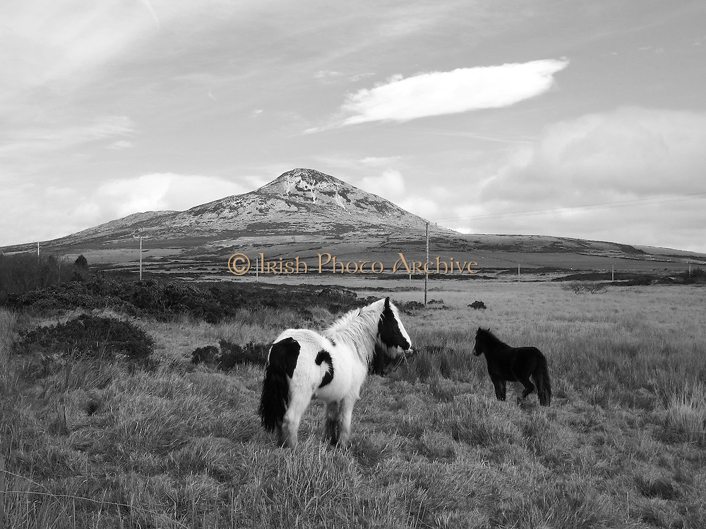 Sugarloaf horses, Wicklow, Ireland