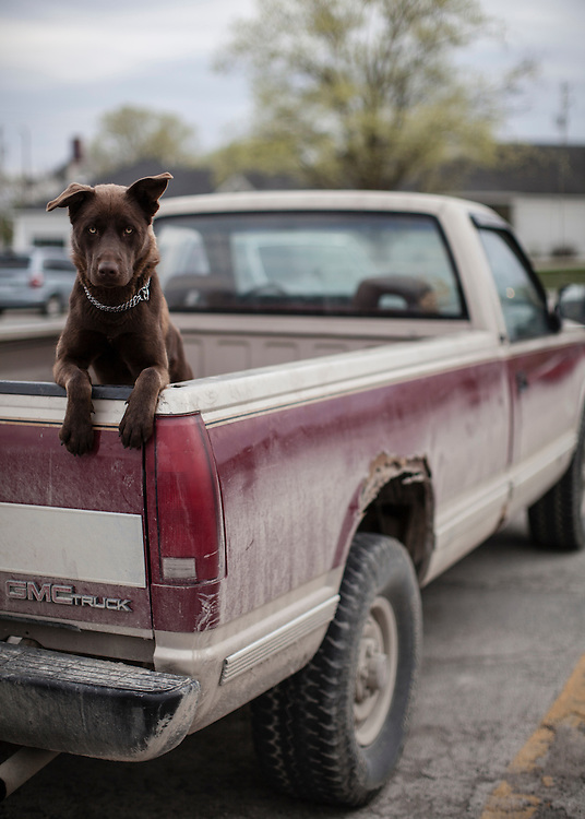A dog sits in the back of a pickup truck on Thursday, March 29, 2012 in Webster City, IA.