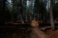 California, Desolation Wilderness, Forests, Hiking, Nature, Peaceful, Pacific Crest Trail, Tahoe, Trees