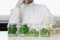 Four glass jars containing plant material lab worker behind