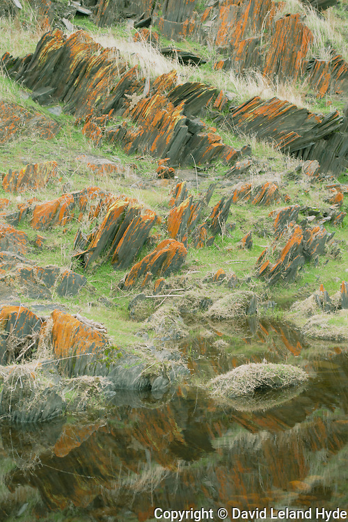 Red Lichen And Yellow Lichen On Vertical Strata Slate Rocks Near Mariposa CA, Tall Grass, Reflecting Pool, Great Central Valley, San Joaquin Valley, California Mountains, Sierra Foothills, 2010 by David Leland Hyde.