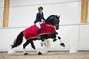 Jeanet Dam - Gijsbert J.D.<br /> Europees Kampioenschap Fries Paard 2017<br /> © DigiShots