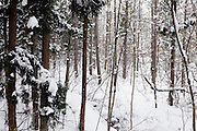 woods tree branches covered with snow