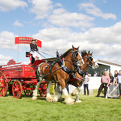 Great Yorkshire Show 2015 Pairs Turnouts