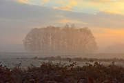 © Licensed to London News Pictures. 10/12/2013. Richmond, UK. A group of trees in the morning fog.  Sunrise and deer in Richmond Park, Surrey, this morning 10 December. Photo credit : Stephen Simpson/LNP