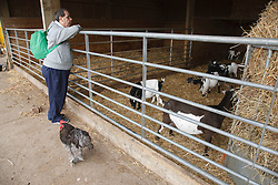 Man with learning disability on trip to farm looking at goats