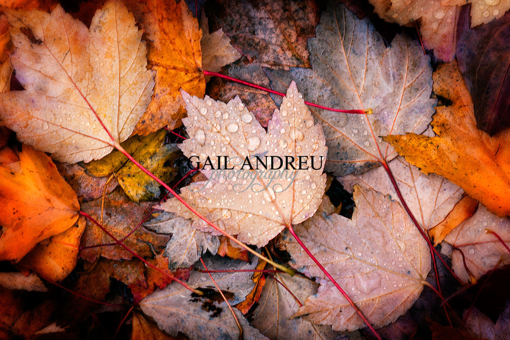 Fall (Autumn) Photography