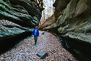 A hiker explores Bear Hollow Canyon in Turkey Run State Park, in historic Parke County, Indiana, USA. Rocky Hollow Falls Canyon Nature Preserve is a National Park Service Registered Natural Landmark. The Mansfield sandstone bedrock was formed during the Carboniferous Period when sand layers at the mouth of ancient Michigan River was compacted and cemented into solid rock. Ancient swamps became coal seams which were mined in the late 1800s and early 1900s. Glacial meltwater erosion in the Pleistocene Epoch carved today's canyons and potholes.